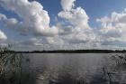 salos